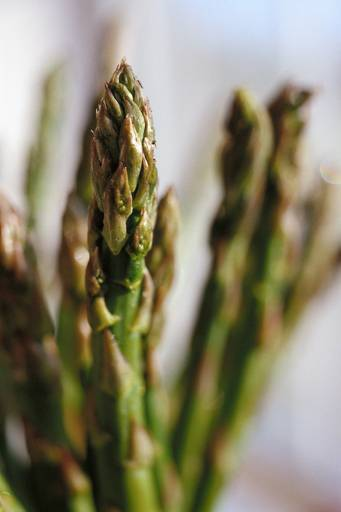 Asparagus is difficult to grow.  Start with an easier crop and build your skills.