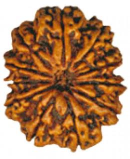 Power of Rudraksha Beads
