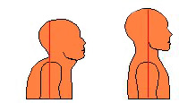 The red line shows the line of gravity. Holding the head in front of the body creates a double chin, a short, over-curved neck and much pain to go with it.