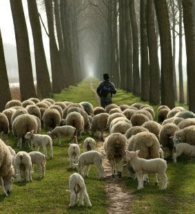 John 10:27 My sheep listen to my voice; I know them, and they follow me.