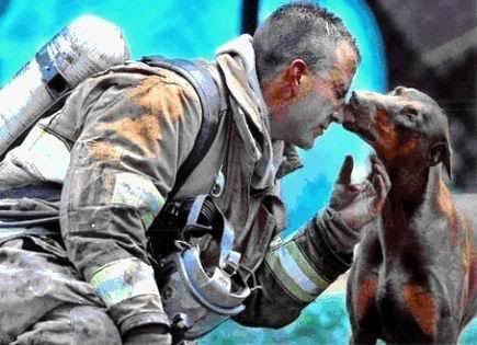 A lovely picture, as it is. Petting even during times of literal calamity.