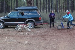Urban Mushing And Central Oregon Vacation: Learn To Dog Sled Or Learn About Urban Mushing