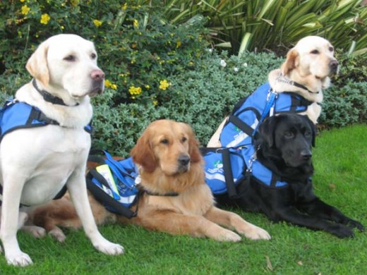 Assistance Dogs in Training