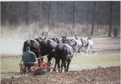 Bringing Back Real Horse Power With Draft Horses