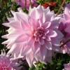 Gladys Hunziker profile image