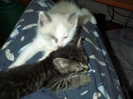 Knut and Rori, 5 weeks old.