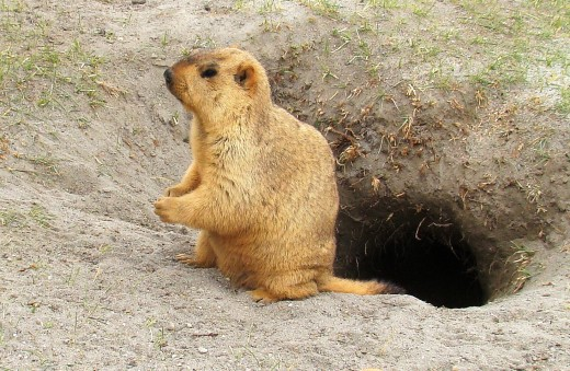 beside her burrow