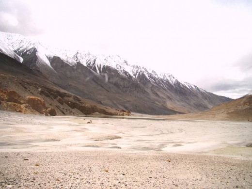 Kiangs in the mountainsof Ladakh