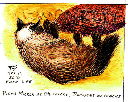 I didn't want to illustrate this with a bottle of pills or prison bars or anything that'd really show what my life is like. So it's a pen and wash drawing of my cat, Ari. Copyright May 2010 all rights reserved, by Robert A. Sloan.