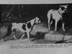 The English Bulldog: Where They Came From