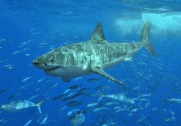 Modern sharks are very similar in shape and function to the ancient ones.