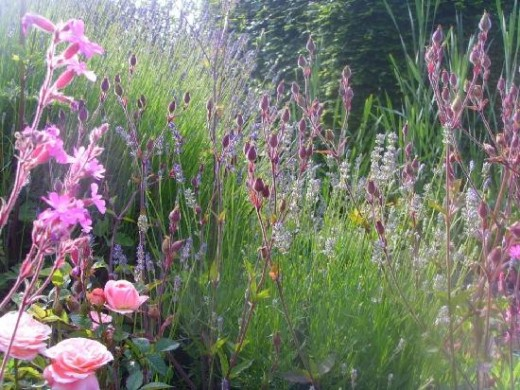 Wildflowers on the Salisbury Plain, England.