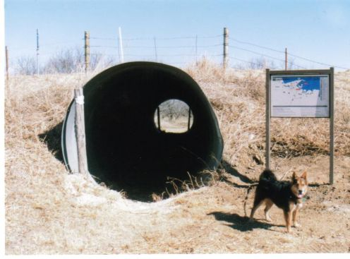 Riley at the entrance to a culvert used for hiking under a road, Lake Arrowhead, Texas.