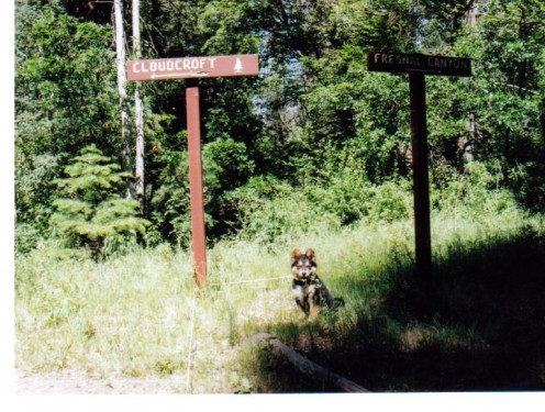 Riley at 6 months old posing next to a trail sign in the New Mexico mountains.
