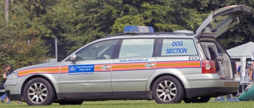 DOG SECTION VAN