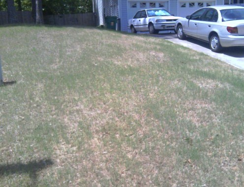 Three weeks later about 90% of weeds are gone!