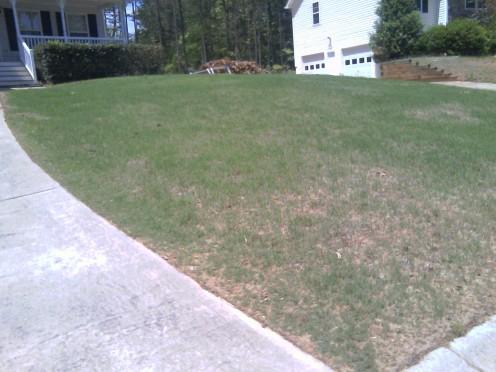 Grass is greening up after some Vigoro Fertilizer!