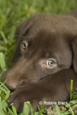 Good Pup?