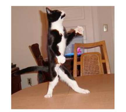 Cats are dancing after tasting Kosher Kats cat food for the first time!