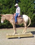 Rocky, the Amazing Trick Mule