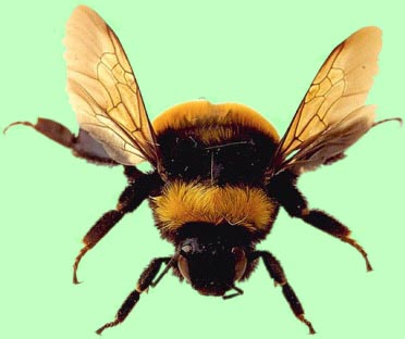 The humble bumble bee should not be able to fly, but it's small mass and air resistance or drag for its diminutive size allows it to fly.
