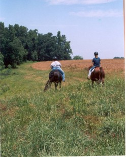 Trail Riding Your Horse Safety