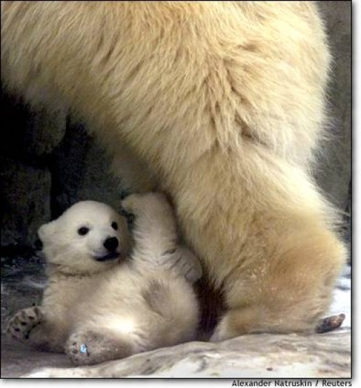 2. A romp in Russia A polar bear cub plays near his mother at the Moscow Zoo .