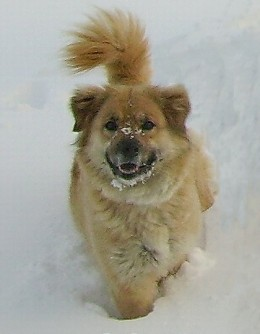 This was taken during the last winter that she was with us...she had a ball that day, playing with our sons in the snow.