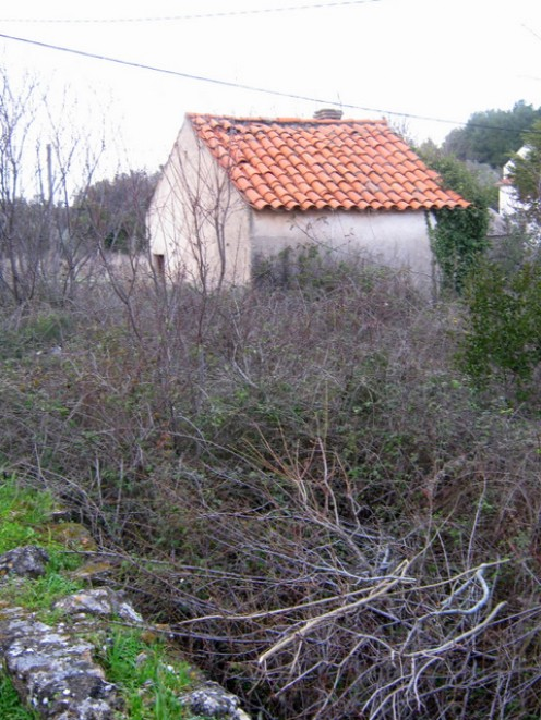 Wiew on small garden-house through the bushes of wild blackberries