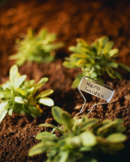 The proper soil acidity ensures healthy plants