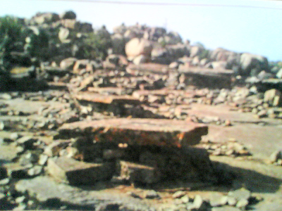 Status of the site after human abandonment