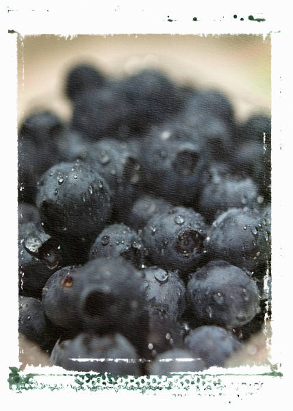 Blueberry sales have increased hugely because they are known to have antioxidant properties