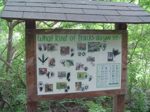 This handy chart is located right next to the sand pit, helping students identify which animals are living in the park