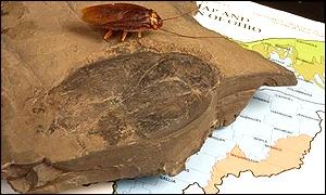 Ohio fossil