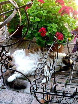 Don't disturb me!  I'm sleeping!
