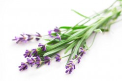 The Uses and Benefits of Lavender Essential Oil for Natural Beauty