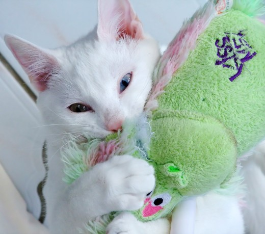 Kittens need to keep their minds active and burn energy - kitten toys are the way to do this.