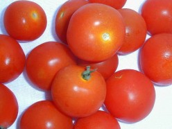 My Secret Growing Best Tomato Plants Is Easy