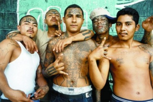 MS 13 drug gang