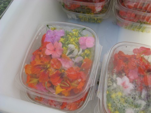Edible flowers for sale / Photo by E. A. Wright