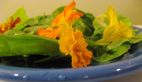 Edible flowers add color and spice to salads / Photo by E. A. Wright