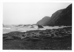 Thought this black and white photo might set the tone...Elephant seals on west side of MacQuarie Island's isthmus 1977
