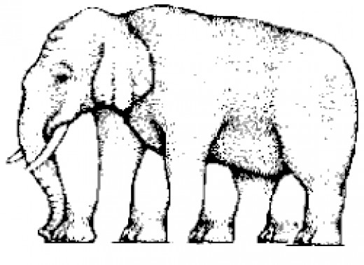 Illusion - counting the number of legs in an elephant