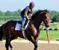 2010 Belmont Stakes Hopefuls