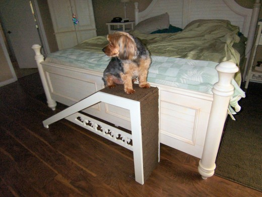 Dog ramp - Florida style (carved out palm trees)! Click on images to enlarge.