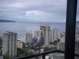 A visitor to our room one morning!