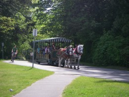 Old-fashioned horse-drawn vehicles meanders the park