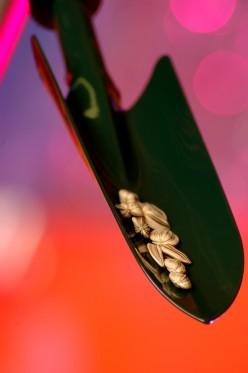 Saving Seeds for Future Gardens