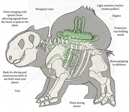 This intresting diagram is how Bulbasaur works. This is one of the only pokemon anatomy images to date.
