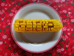 A Guide to Corn: Varieties, Harvesting, and Storing